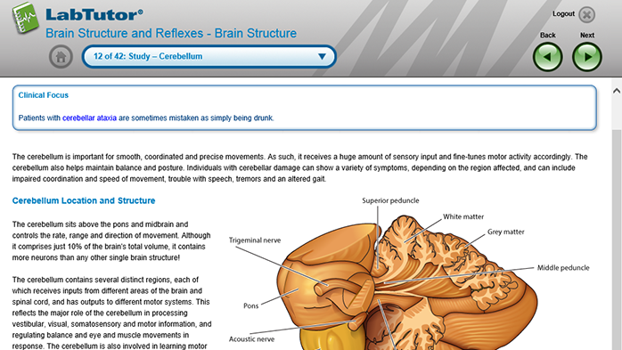 A LabTutor page from the Brain Structure and Reflexes experiment