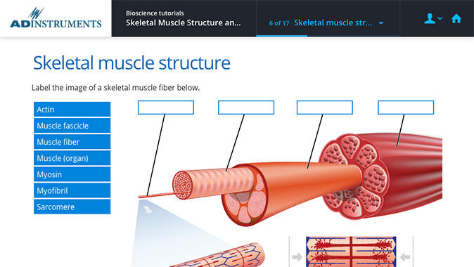 A Lt page showing a lesson about muscle structure