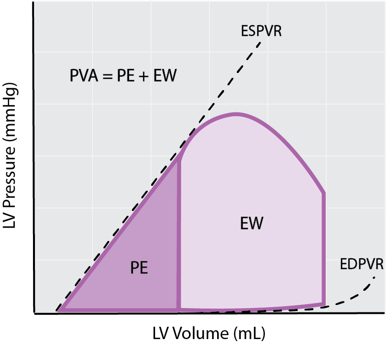 Cardiac energetics from the PV loop - External work, potential enegery and the Pressure-Volume Area.