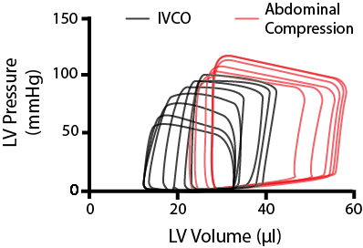 Modulating cardiac loading PV Loops - IVCO and abdominal compressions