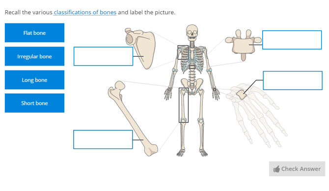 bone classification questions | Anatomy Collection | Lt